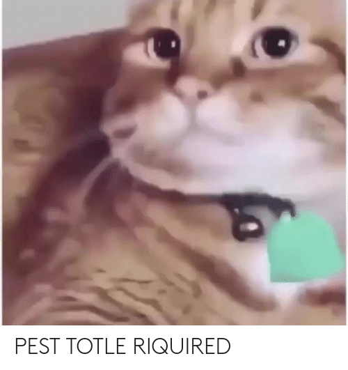 pest: PEST TOTLE RIQUIRED