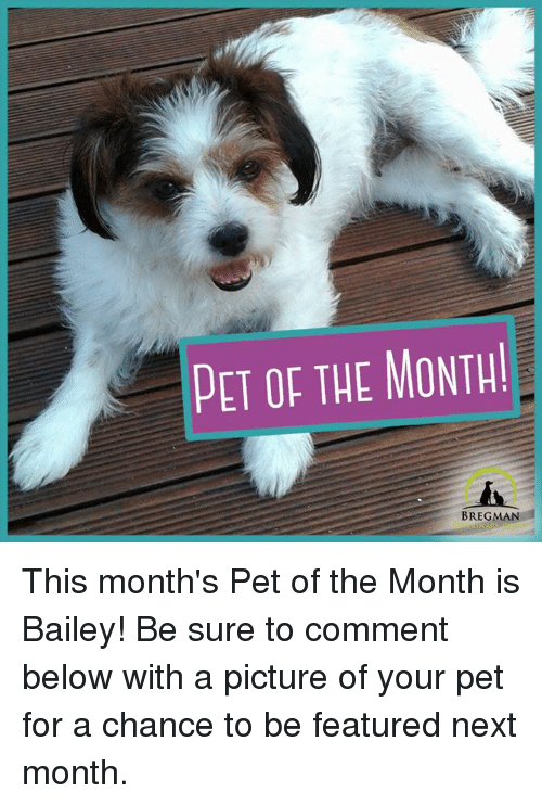 Memes, A Picture, and 🤖: PET OF THE MONTH!  BREGMA This month's Pet of the Month is Bailey! Be sure to comment below with a picture of your pet for a chance to be featured next month.