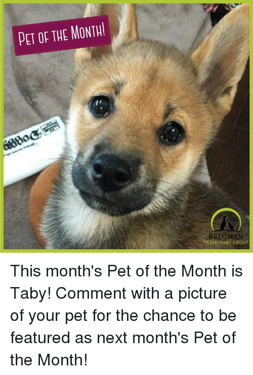 Memes, 🤖, and Veterinary: PET OF THE MONTH!  BREGMAN  VETERINARY GROUP This month's Pet of the Month is Taby! Comment with a picture of your pet for the chance to be featured as next month's Pet of the Month!
