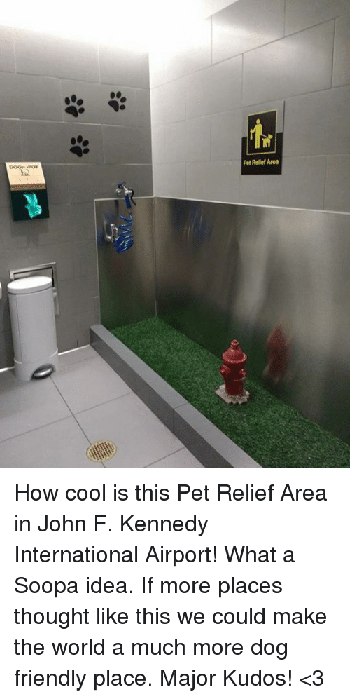Memes, 🤖, and Idea: Pet Relief Area How cool is this Pet Relief Area in John F. Kennedy International Airport! What a Soopa idea. If more places thought like this we could make the world a much more dog friendly place. Major Kudos! <3