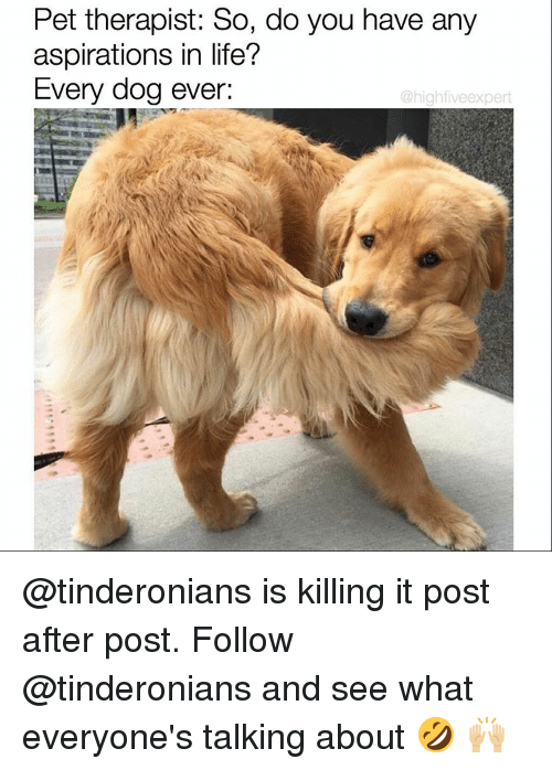 aspiration in life: Pet therapist: So, do you have any  aspirations in life?  Every dog ever:  @high fiveexpert @tinderonians is killing it post after post. Follow @tinderonians and see what everyone's talking about 🤣 🙌🏼