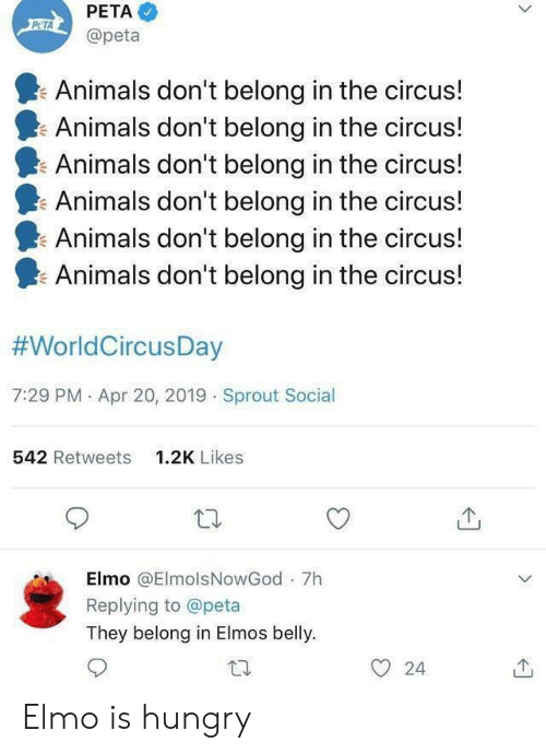 Elmo: PETA  PETA  @peta  Animals don't belong in the circus!  Animals don't belong in the circus!  Animals don't belong in the circus!  Animals don't belong in the circus!  Animals don't belong in the circus!  Animals don't belong in the circus!  #WorldCircusDay  7:29 PM Apr 20, 2019 Sprout Social  542 Retweets  1.2K Likes  Elmo @ElmolsNowGod 7h  Replying to @peta  They belong in Elmos belly  24  > Elmo is hungry