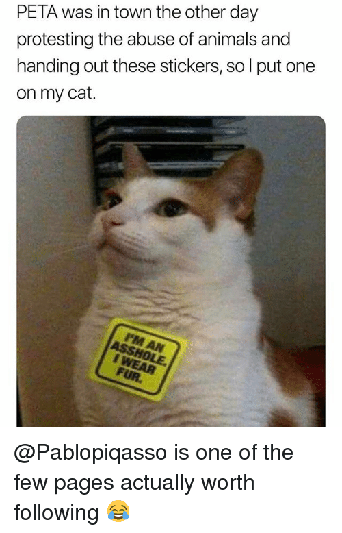 Animals, Peta, and Trendy: PETA was in town the other day  protesting the abuse of animals and  handing out these stickers, so l put one  on my cat. @Pablopiqasso is one of the few pages actually worth following 😂