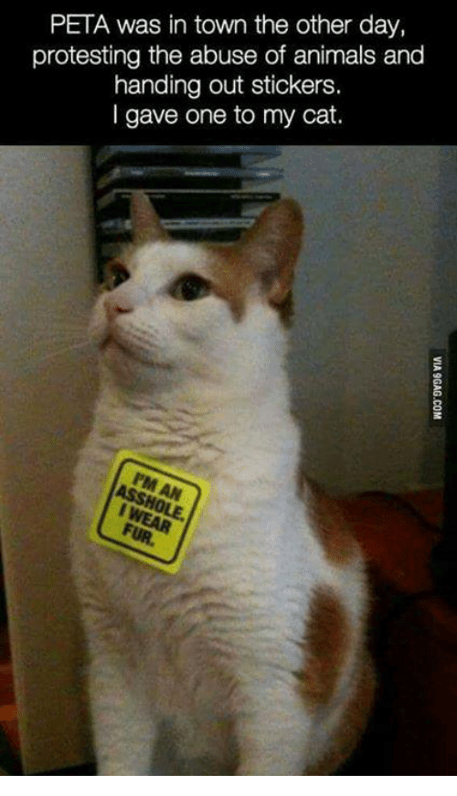 Protesting: PETA was in town the other day,  protesting the abuse of animals and  handing out stickers.  I gave one to my cat.  8