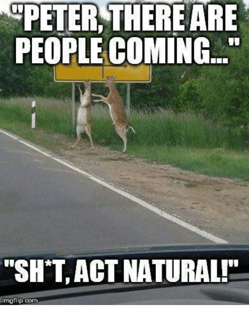 Funny Acting People Meme : Peter there are people coming  sht act naturalp mgflipcom