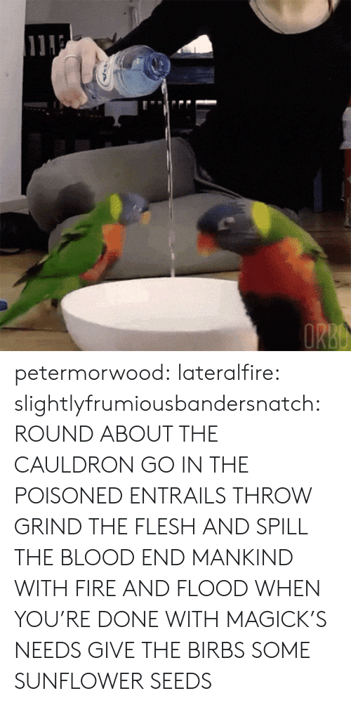 Flood: petermorwood: lateralfire:  slightlyfrumiousbandersnatch:  ROUND ABOUT THE CAULDRON GO IN THE POISONED ENTRAILS THROW  GRIND THE FLESH AND SPILL THE BLOOD END MANKIND WITH FIRE AND FLOOD  WHEN YOU'RE DONE WITH MAGICK'S NEEDS GIVE THE BIRBS SOME SUNFLOWER SEEDS