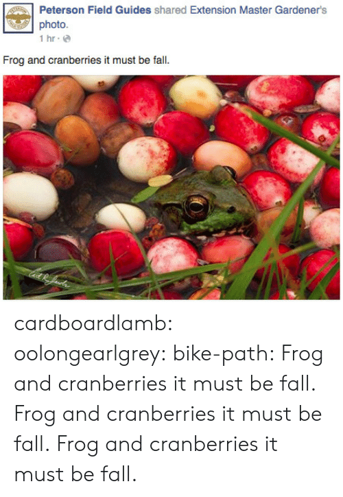 cranberries: Peterson Field Guides shared Extension Master Gardener's  photo  İhr.@  Frog and cranberries it must be fall. cardboardlamb: oolongearlgrey:  bike-path:  Frog and cranberries it must be fall.    Frog and cranberries it must be fall.    Frog and cranberries it must be fall.