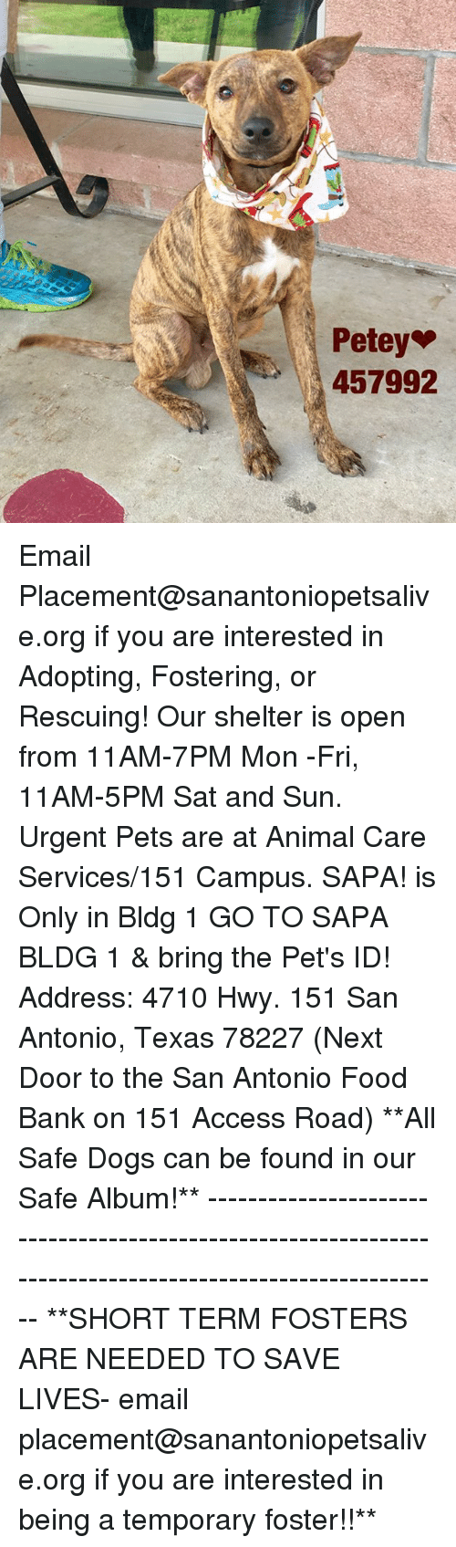 Dogs, Food, and Memes: Petey  457992 Email Placement@sanantoniopetsalive.org if you are interested in Adopting, Fostering, or Rescuing!  Our shelter is open from 11AM-7PM Mon -Fri, 11AM-5PM Sat and Sun.  Urgent Pets are at Animal Care Services/151 Campus. SAPA! is Only in Bldg 1 GO TO SAPA BLDG 1 & bring the Pet's ID! Address: 4710 Hwy. 151 San Antonio, Texas 78227 (Next Door to the San Antonio Food Bank on 151 Access Road)  **All Safe Dogs can be found in our Safe Album!** ---------------------------------------------------------------------------------------------------------- **SHORT TERM FOSTERS ARE NEEDED TO SAVE LIVES- email placement@sanantoniopetsalive.org if you are interested in being a temporary foster!!**