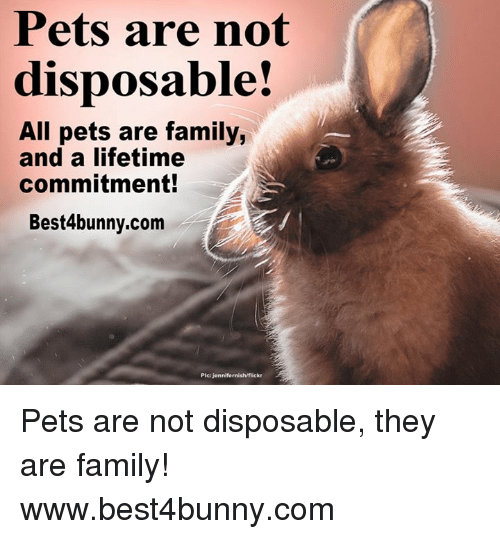 Family, Memes, and Pets: Pets are not  disposable!  All pets are family,  and a lifetime  commitment!  Best4bunny.com  Plc Jennifernish/fiic  A Pets are not disposable, they are family! www.best4bunny.com