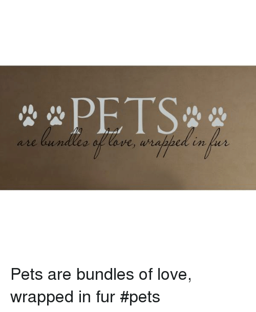 Love, Memes, and Pets: PETS  are  re Pets are bundles of love, wrapped in fur    #pets