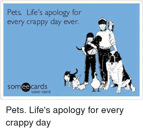 Memes, Pets, and Someecards: Pets. Life's apology for  ppy day ever.  someecards  user card Pets. Life's apology for every crappy day