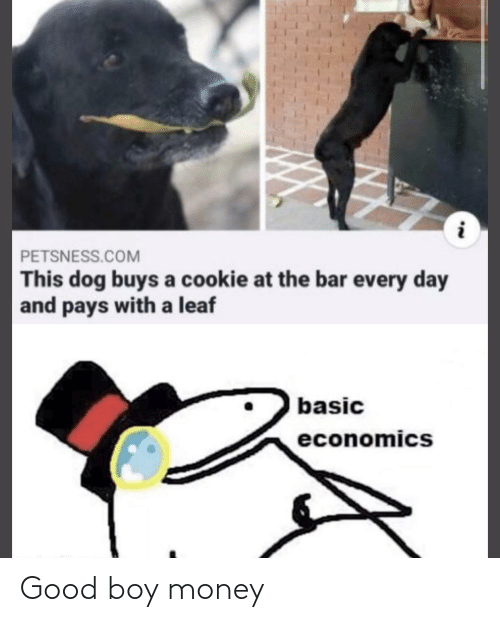 basic: PETSNESS.COM  This dog buys a cookie at the bar every day  and pays with a leaf  basic  economics  NN Good boy money