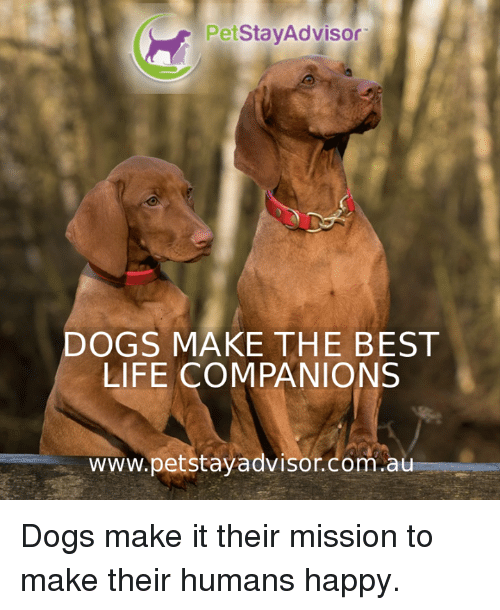 Dogs, Life, and Memes: PetStaVAdvisor  DOGS MAKE THE BEST  LIFE COMPANIONS  www.petstayadvisor.com.au Dogs make it their mission to make their humans happy.
