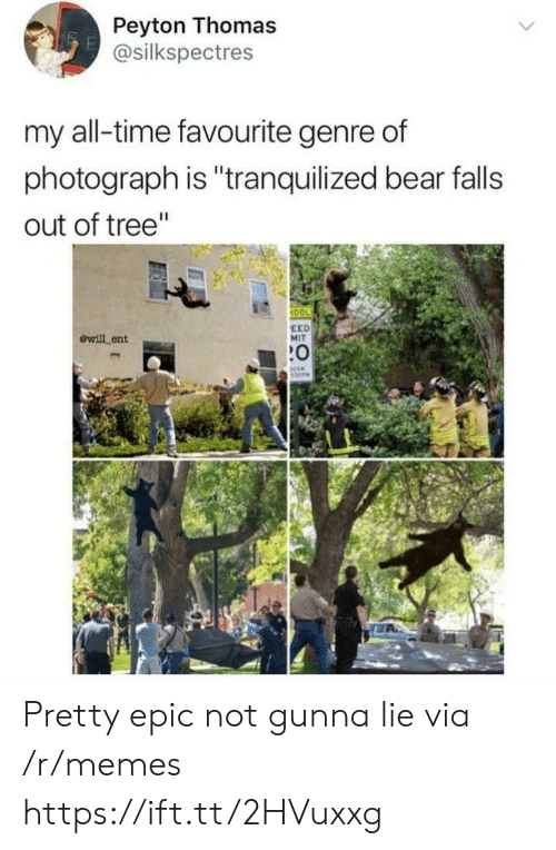 "Gunna: Peyton Thomas  @silkspectres  my all-time favourite genre of  photograph is ""tranquilized bear falls  out of tree""  100  ewill ent  EED  MIT  :0 Pretty epic not gunna lie via /r/memes https://ift.tt/2HVuxxg"