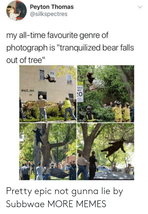 "Gunna: Peyton Thomas  @silkspectres  my all-time favourite genre of  photograph is ""tranquilized bear falls  out of tree""  100  ewill ent  EED  MIT  :0 Pretty epic not gunna lie by Subbwae MORE MEMES"