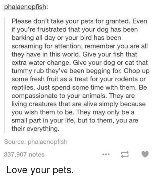 Alive, Animals, and Fresh: phalaenopfish  Please don't take your pets for granted. Even  if you're frustrated that your dog has been  barking all day or your bird has beern  screaming for attention, remember you are all  they have in this world. Give your fish that  extra water change. Give your dog or cat that  tummy rub they've been begging for. Chop up  some fresh fruit as a treat for your rodents or  reptiles. Just spend some time with them. Be  compassionate to your animals. They are  living creatures that are alive simply because  you wish them to be. They may only be a  small part in your life, but to them, you are  their everything.  Source: phalaenopfish  337,907 notes <p>Love your pets.</p>