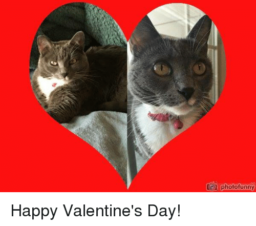Memes, 🤖, and Funny Happy: photo funny Happy Valentine's Day!
