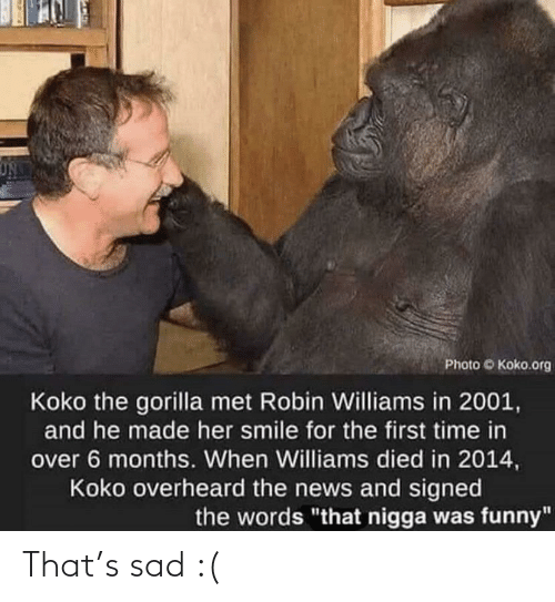 "koko: Photo Koko.org  Koko the gorilla met Robin Williams in 2001,  and he made her smile for the first time in  over 6 months. When Williams died in 2014,  Koko overheard the news and signed  the words ""that nigga was funny"" That's sad :("