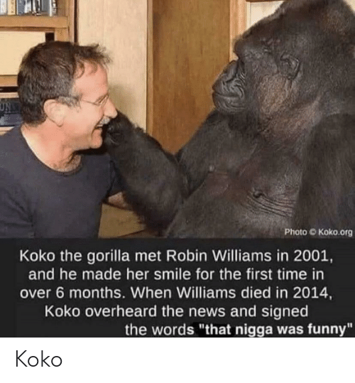 "koko: Photo O Koko.org  Koko the gorilla met Robin Williams in 2001,  and he made her smile for the first time in  over 6 months. When Williams died in 2014,  Koko overheard the news and signed  the words ""that nigga was funny"" Koko"