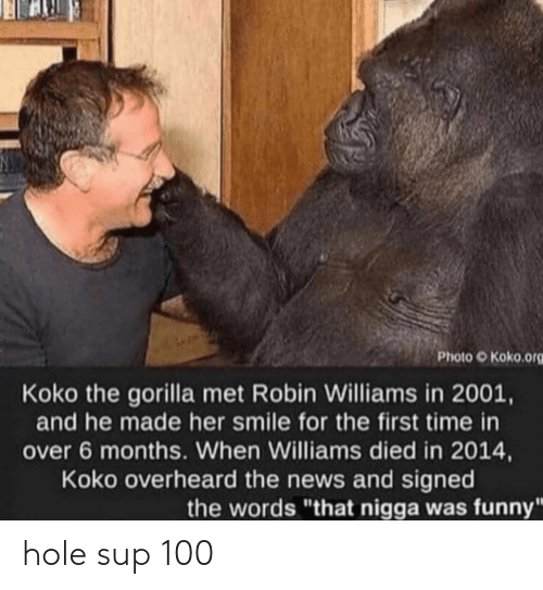 "koko: Photo O Koko.org  Koko the gorilla met Robin Williams in 2001,  and he made her smile for the first time in  over 6 months. When Williams died in 2014,  Koko overheard the news and signed  the words ""that nigga was funny hole sup 100"
