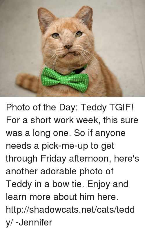 Short Work Week: Photo of the Day: Teddy TGIF! For a short work week, this sure was a long one. So if anyone needs a pick-me-up to get through Friday afternoon, here's another adorable photo of Teddy in a bow tie. Enjoy and learn more about him here.  http://shadowcats.net/cats/teddy/ -Jennifer