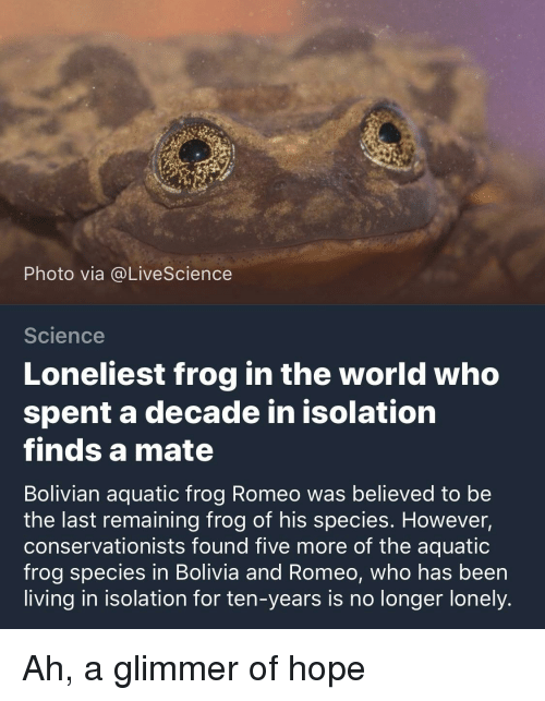 Frog Species: Photo via @LiveScience  Science  Loneliest frog in the world who  spent a decade in isolatiorn  finds a mate  Bolivian aquatic frog Romeo was believed to be  the last remaining frog of his species. However,  conservationists found five more of the aquatic  frog species in Bolivia and Romeo, who has been  living in isolation for ten-years is no longer lonely.