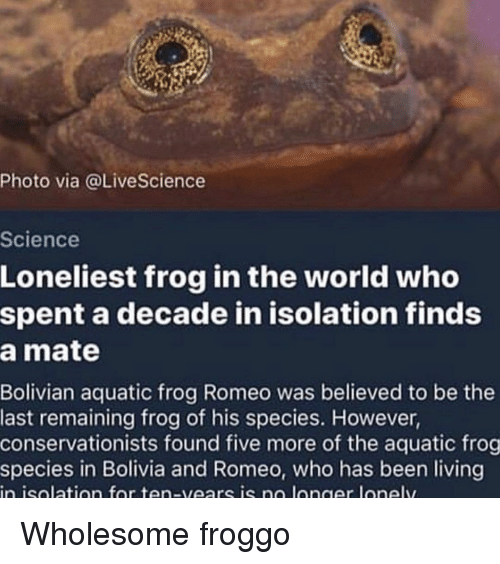 Frog Species: Photo via @LiveScience  Science  Loneliest frog in the world who  spent a decade in isolation finds  a mate  Bolivian aquatic frog Romeo was believed to be the  last remaining frog of his species. However,  conservationists found five more of the aquatic frog  species in Bolivia and Romeo, who has been living  in isolatian for ten-vears is no langer lonely