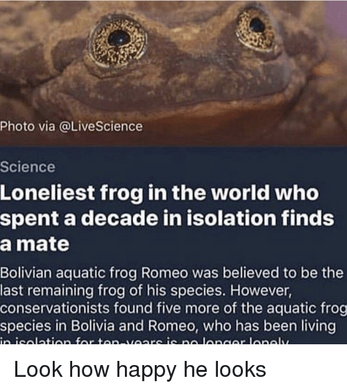 Frog Species: Photo via @LiveScience  Science  Loneliest frog in the world who  spent a decade in isolation finds  a mate  Bolivian aquatic frog Romeo was believed to be the  last remaining frog of his species. However,  conservationists found five more of the aquatic frog  species in Bolivia and Romeo, who has been living