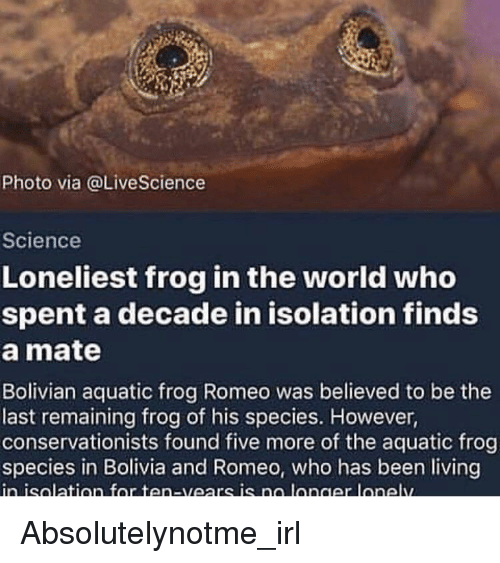 Frog Species: Photo via @LiveScience  Science  Loneliest frog in the world who  spent a decade in isolation finds  a mate  Bolivian aquatic frog Romeo was believed to be the  last remaining frog of his species. However,  conservationists found five more of the aquatic frog  species in Bolivia and Romeo, who has been living  inisalation for ten-vears is na longer lonelw