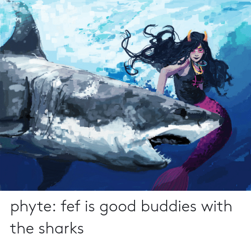 buddies: phyte: fef is good buddies with the sharks