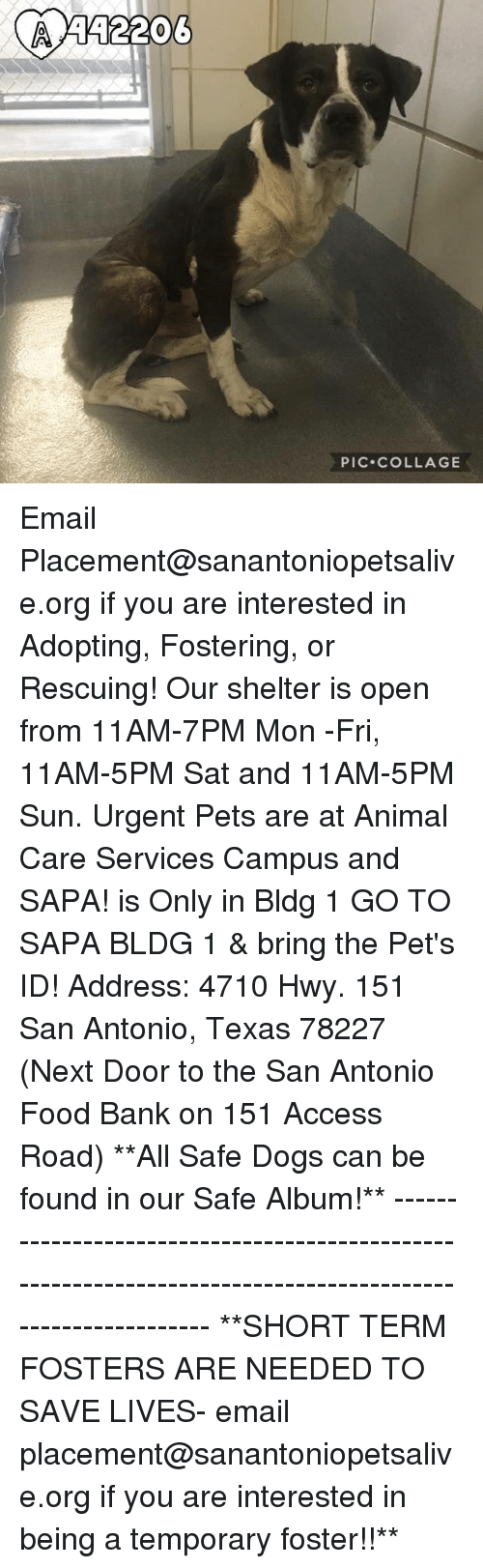 Dogs, Food, and Memes: PIC.COLLAGE Email Placement@sanantoniopetsalive.org if you are interested in Adopting, Fostering, or Rescuing!  Our shelter is open from 11AM-7PM Mon -Fri, 11AM-5PM Sat and 11AM-5PM Sun.  Urgent Pets are at Animal Care Services Campus and SAPA! is Only in Bldg 1 GO TO SAPA BLDG 1 & bring the Pet's ID! Address: 4710 Hwy. 151 San Antonio, Texas 78227 (Next Door to the San Antonio Food Bank on 151 Access Road)  **All Safe Dogs can be found in our Safe Album!** ---------------------------------------------------------------------------------------------------------- **SHORT TERM FOSTERS ARE NEEDED TO SAVE LIVES- email placement@sanantoniopetsalive.org if you are interested in being a temporary foster!!**