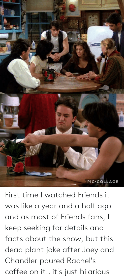 joey and chandler: PIC COLLAGE First time I watched Friends it was like a year and a half ago and as most of Friends fans, I keep seeking for details and facts about the show, but this dead plant joke after Joey and Chandler poured Rachel's coffee on it.. it's just hilarious