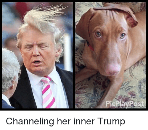 Memes, 🤖, and Channel: PicPlay Post Channeling her inner Trump