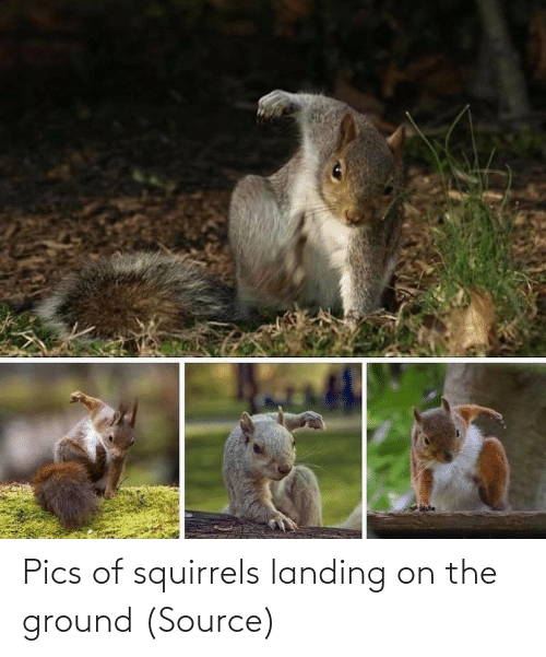 The: Pics of squirrels landing on the ground (Source)
