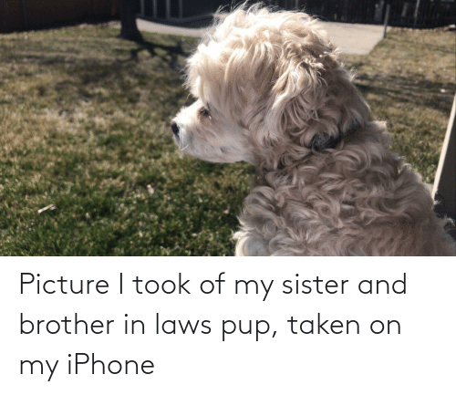 in laws: Picture I took of my sister and brother in laws pup, taken on my iPhone