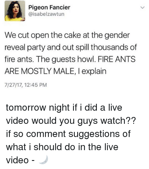 Fire, Memes, and Party: Pigeon Fancier  @isabelzawtun  We cut open the cake at the gender  reveal party and out spill thousands of  fire ants. The guests howl. FIRE ANTS  ARE MOSTLY MALE, I explain  7/27/17, 12:45 PM tomorrow night if i did a live video would you guys watch?? if so comment suggestions of what i should do in the live video - 🌙