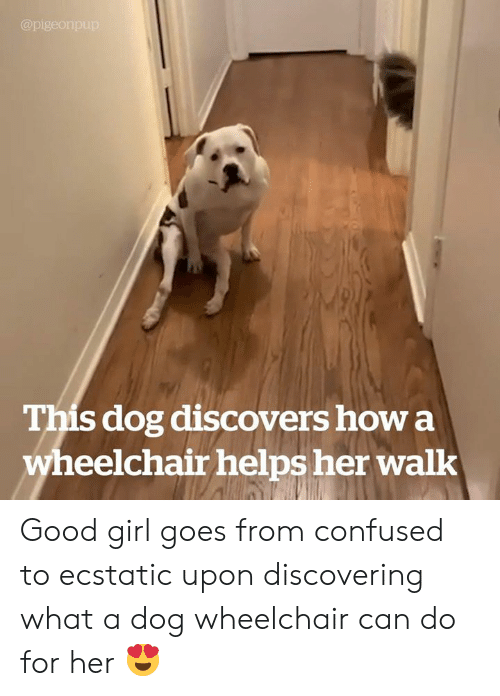 ecstatic: @pigeonpup  This dog discovers how a  wheelchair helps her walk Good girl goes from confused to ecstatic upon discovering what a dog wheelchair can do for her 😍