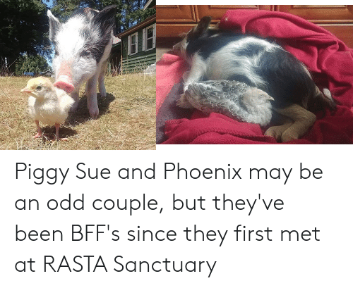 rasta: Piggy Sue and Phoenix may be an odd couple, but they've been BFF's since they first met at RASTA Sanctuary