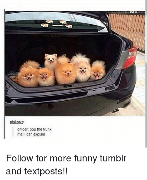 Funny, Memes, and Pop: pinkrazr  officer: pop the trunk  me: can explain Follow for more funny tumblr and textposts!!