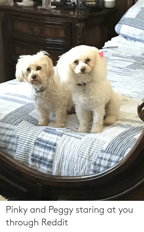 And Peggy: Pinky and Peggy staring at you through Reddit