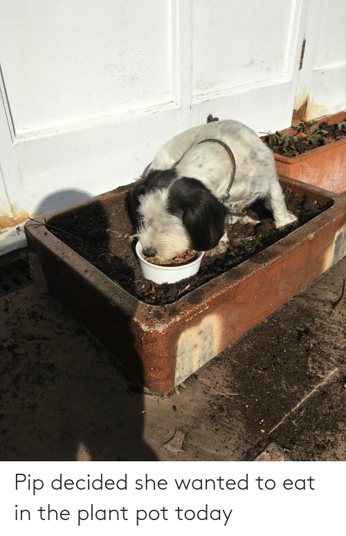 pot: Pip decided she wanted to eat in the plant pot today