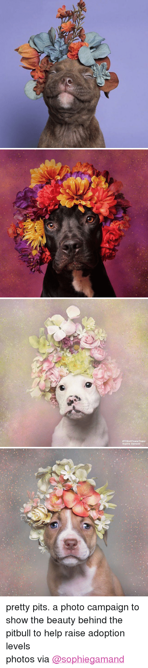 """Pits:  #PitBullFlowerRawer  Sophle Gamand <p>pretty pits. a photo campaign to show the beauty behind the pitbull to help raise adoption levels<br/></p><p>photos via <a href=""""http://www.sophiegamand.com/flowerpower/"""" target=""""_blank"""">@sophiegamand</a></p>"""
