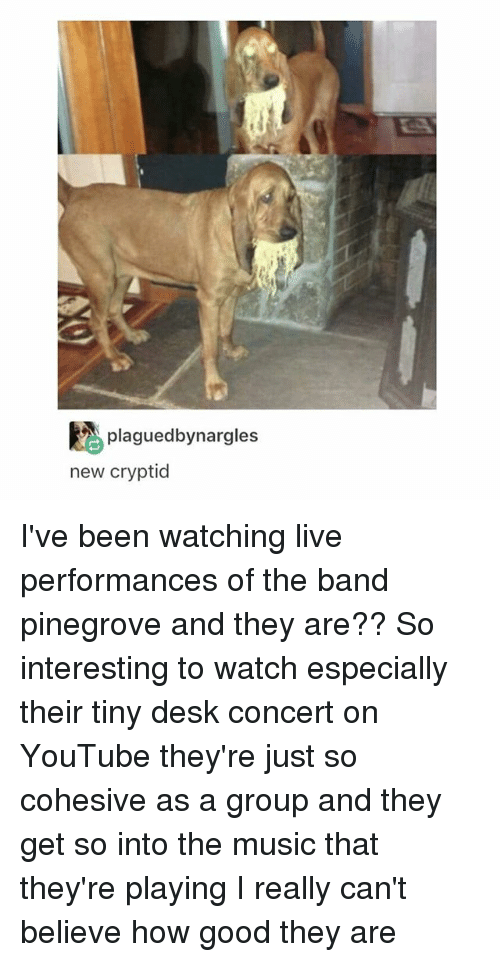Music, Tumblr, and youtube.com: plaguedbynargles  new cryptid I've been watching live performances of the band pinegrove and they are?? So interesting to watch especially their tiny desk concert on YouTube they're just so cohesive as a group and they get so into the music that they're playing I really can't believe how good they are