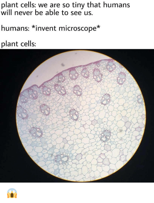 scope: plant cells: we are so tiny that humans  will never be able to see us.  humans: *invent micro*  plant cells:  scope 😱