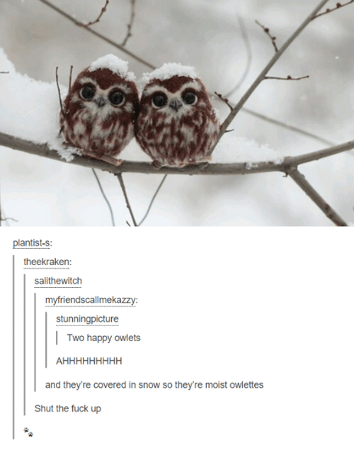 Moistness: plantist-s:  theekraken  salithewitch  myfriendscallmekazzy  stunningpicture  Two happy owlets  and they're covered in snow so they're moist owlettes  Shut the fuck up