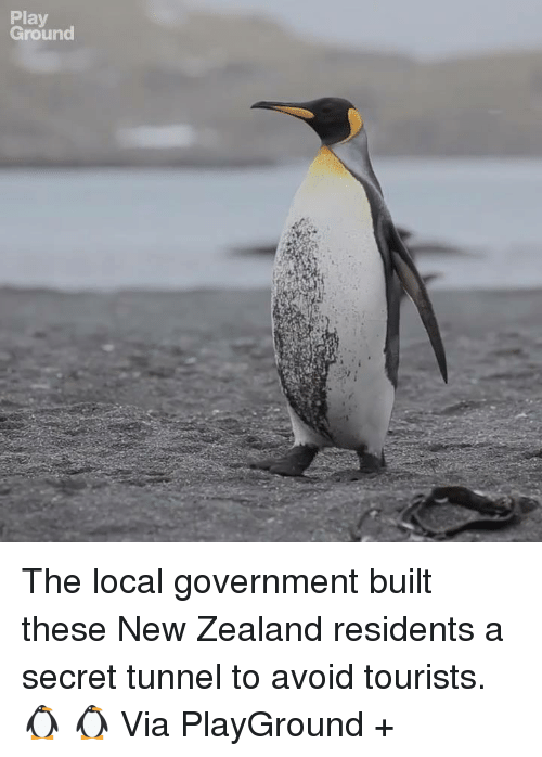 secret tunnel: Play  Ground The local government built these New Zealand residents a secret tunnel to avoid tourists. 🐧 🐧  Via PlayGround +