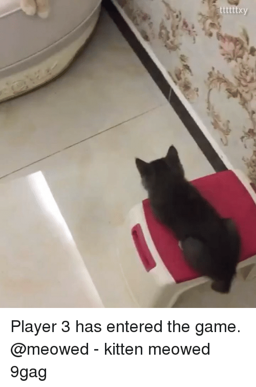 9gag, Memes, and The Game: Player 3 has entered the game. @meowed - kitten meowed 9gag