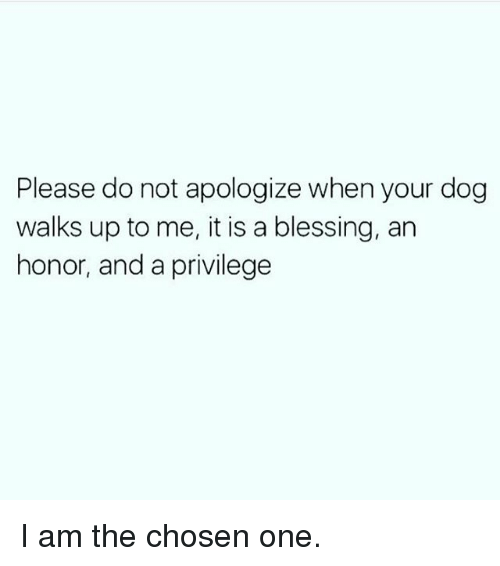 Memes, 🤖, and Chosen: Please do not apologize when your dog  walks up to me, it is a blessing, an  honor, and a privilege I am the chosen one.