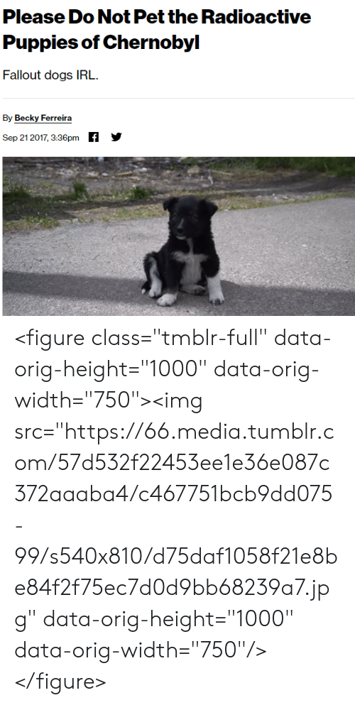 """Fallout: Please Do Not Pet the Radioactive  Puppies of Chernobyl  Fallout dogs IRL  By Becky Ferreira  f  Sep 21 2017, 3:36pm <figure class=""""tmblr-full"""" data-orig-height=""""1000"""" data-orig-width=""""750""""><img src=""""https://66.media.tumblr.com/57d532f22453ee1e36e087c372aaaba4/c467751bcb9dd075-99/s540x810/d75daf1058f21e8be84f2f75ec7d0d9bb68239a7.jpg"""" data-orig-height=""""1000"""" data-orig-width=""""750""""/></figure>"""