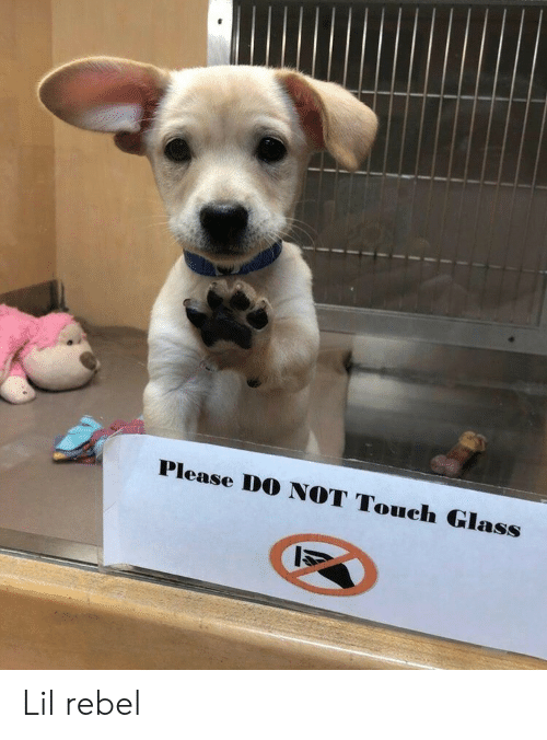Please Do Not: Please DO NOT Touch Glass Lil rebel